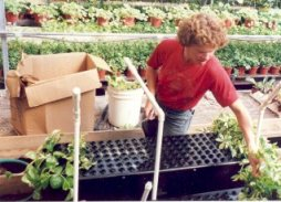High production capacity for greenhouse growers