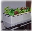 True Aeroponic Systems for clean food & crops