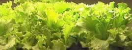 High volume production of vegetables, flowers, indoor/outdoor plants, trees and more