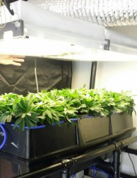 Aeroponic Equipment