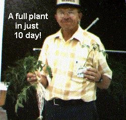 Why is this grower smiling? He reduced his tomato planting to harvesting by 58 days!