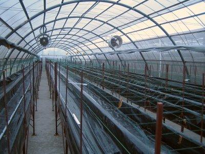Aeroponic Greenhouse