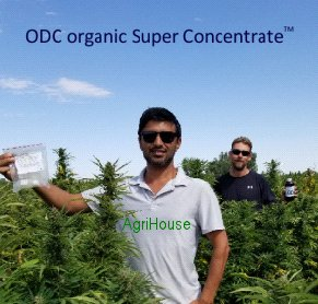 ODC users in their HEMP field